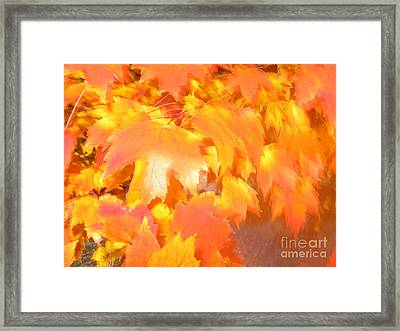 Fall 1 Framed Print by Tony Cordoza