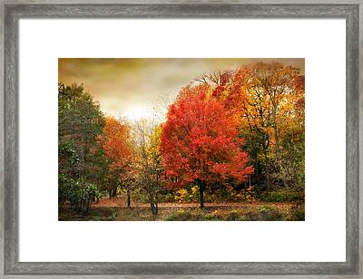 Fall Aflame Framed Print by Jessica Jenney