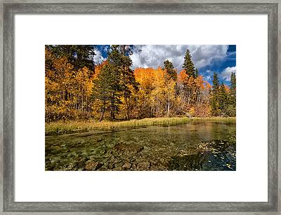 Fall Along Bishop Creek Framed Print by Cat Connor