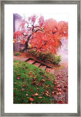 Fall And Fog Framed Print by Suzanne McKay