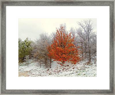 Fall And Winter Framed Print