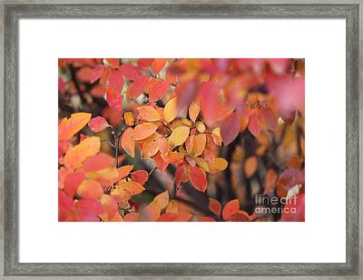 Framed Print featuring the photograph Fall by Ann E Robson