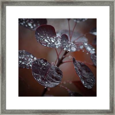 Fall As They May Framed Print