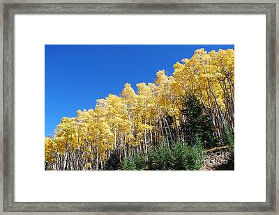 Fall Aspens Of New Mexico Framed Print