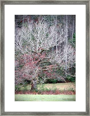 Framed Print featuring the photograph Fall At Cades Cove by Todd Blanchard