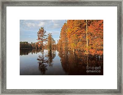 Fall At Trap Pond Framed Print