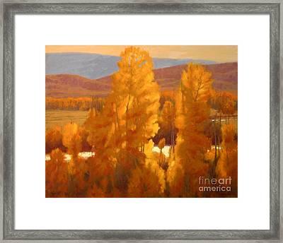 Fall Backlight Framed Print by Doyle Shaw
