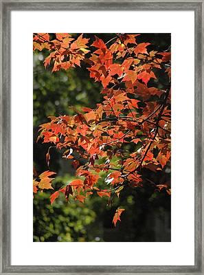 Autumn's Best Framed Print by Les Scarborough