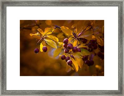 Fall Berries Framed Print by Janis Knight