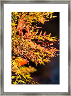 Fall Berries Framed Print by Mike Lee