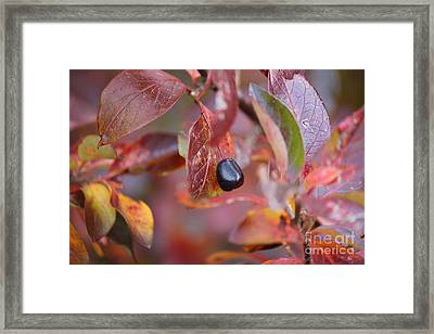 Framed Print featuring the photograph Fall Berry by Ann E Robson