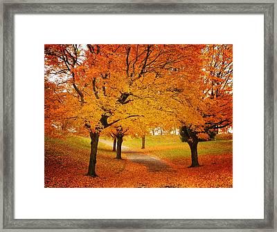 Fall Blaze Framed Print