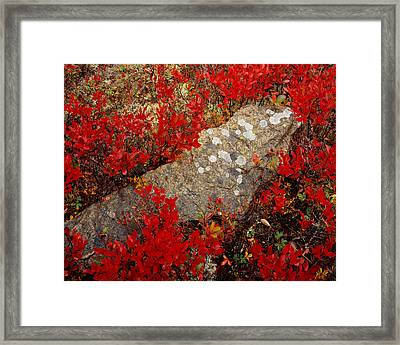 Fall Blueberries And Moss-h Framed Print