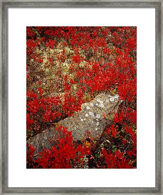 Fall Blueberries And Moss Framed Print
