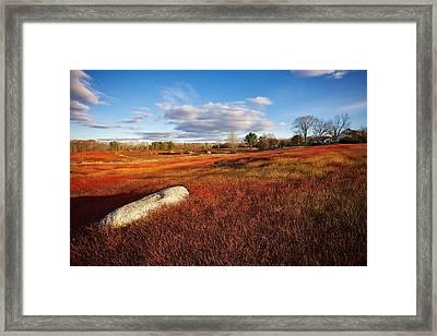 Fall Blueberry Barrens Framed Print