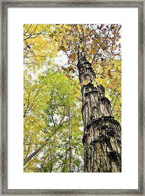 Fall Blur Framed Print