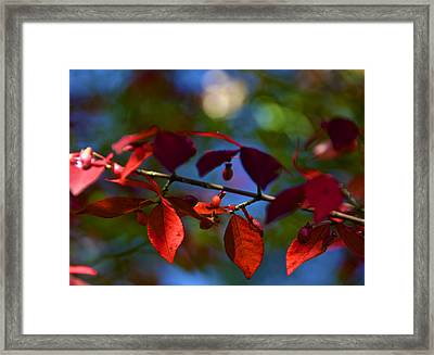 Fall Bokeh Framed Print