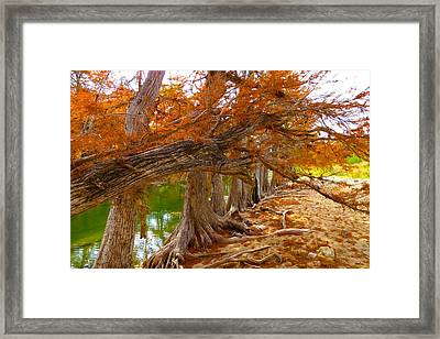 Framed Print featuring the photograph Fall Brilliance by David  Norman