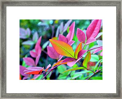 Fall Brilliance Framed Print