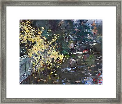Fall By The Pond Framed Print