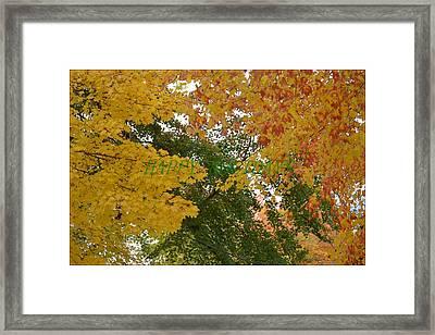 Fall Canopy Framed Print by Sonali Gangane