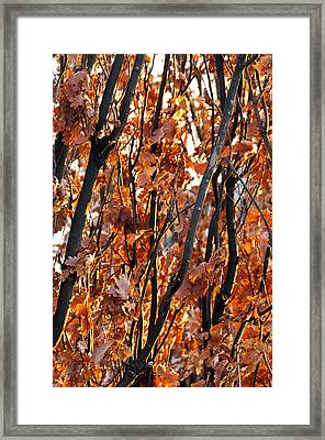 Fall Framed Print by Celso Bressan