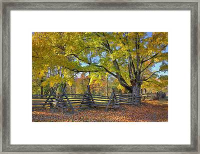 Fall Color #2 Framed Print