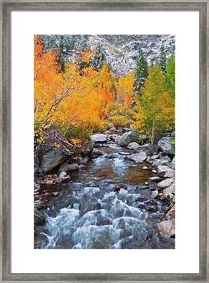 Fall Color Along Bishop Creek, Inyo Framed Print