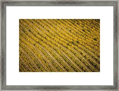 Fall Color Grape Vines Framed Print by Connie Cooper-Edwards