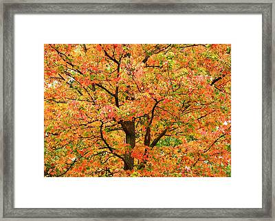 Fall Color Palette Framed Print by Judy Genovese