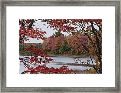 Fall Color Framed Print