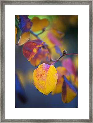 Fall Color Framed Print by Stephen Anderson