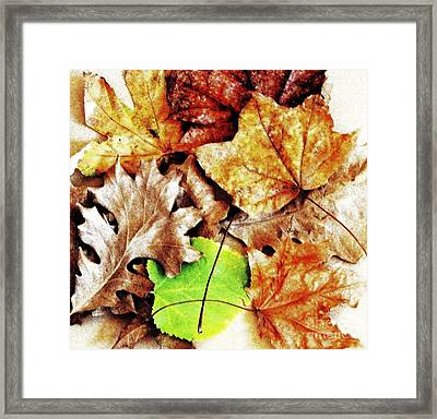 Fall Colored Leaves Framed Print by Marsha Heiken