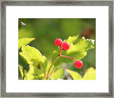 Fall Colors #1 Framed Print