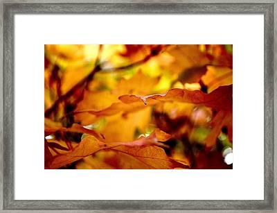 Fall Colors-2014-2 Framed Print by Srinivasan Venkatarajan