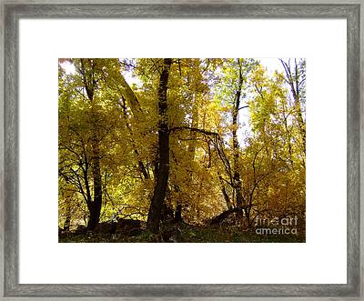 Fall Colors 6169 Framed Print