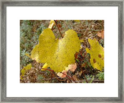 Fall Colors 6302 Framed Print