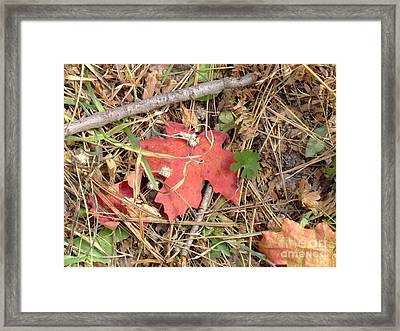 Fall Colors 6307 Framed Print