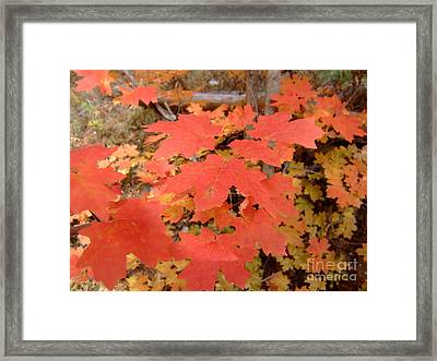 Fall Colors 6308 Framed Print