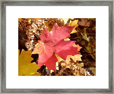 Fall Colors 6313 Framed Print