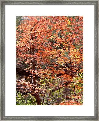 Fall Colors 6335 Framed Print