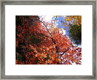 Fall Colors 6340 Framed Print