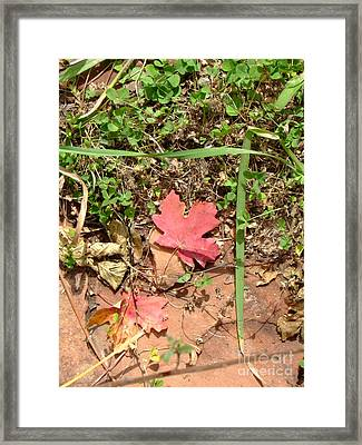 Fall Colors 6342 Framed Print