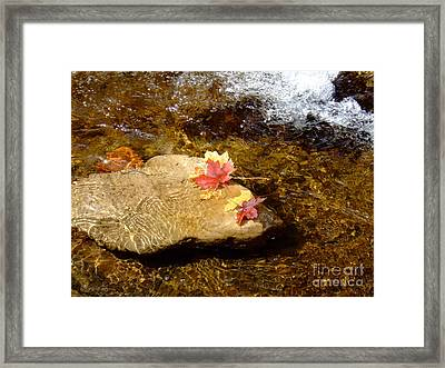 Fall Colors 6348 Framed Print