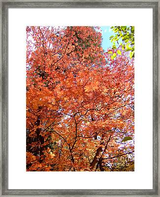 Fall Colors 6357 Framed Print