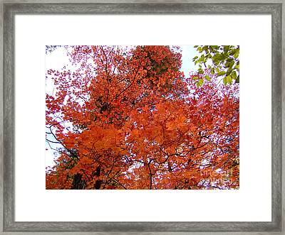 Fall Colors 6359 Framed Print