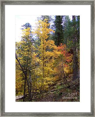 Fall Colors 6368 Framed Print