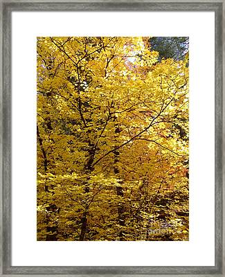 Fall Colors 6371 Framed Print