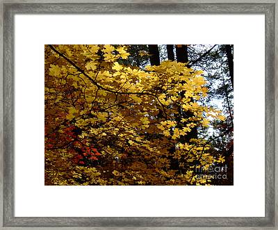 Fall Colors 6372 Framed Print