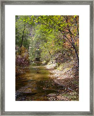 Fall Colors 6379 Framed Print